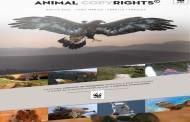 Animal Copyrights, un banco de imágenes realizado por animales