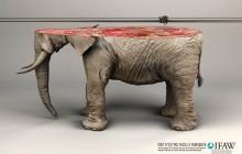 Cuando la virtualidad no alcanza, campaña a favor de los animales
