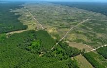 Alianza Unilever-WWF: #SaveForests, campañas verdes color árbol