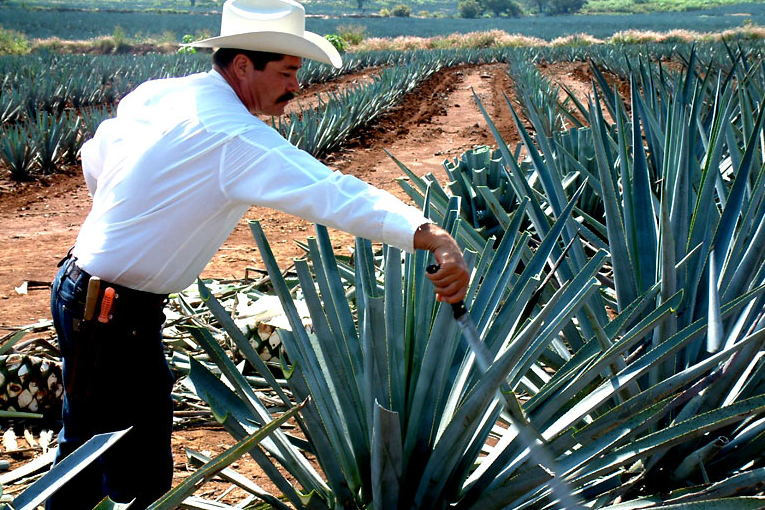 Ford utilizará el agave de José Cuervo para fabricar piezas del coche